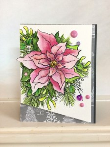Poinsettia2